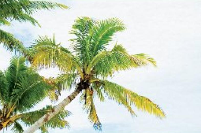 Blue Persuasion Guam