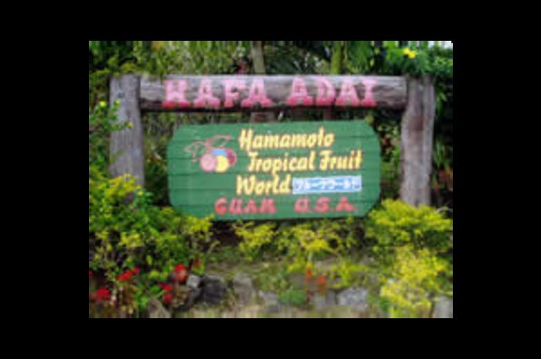 Hamamoto Tropical Fruit World Image 01