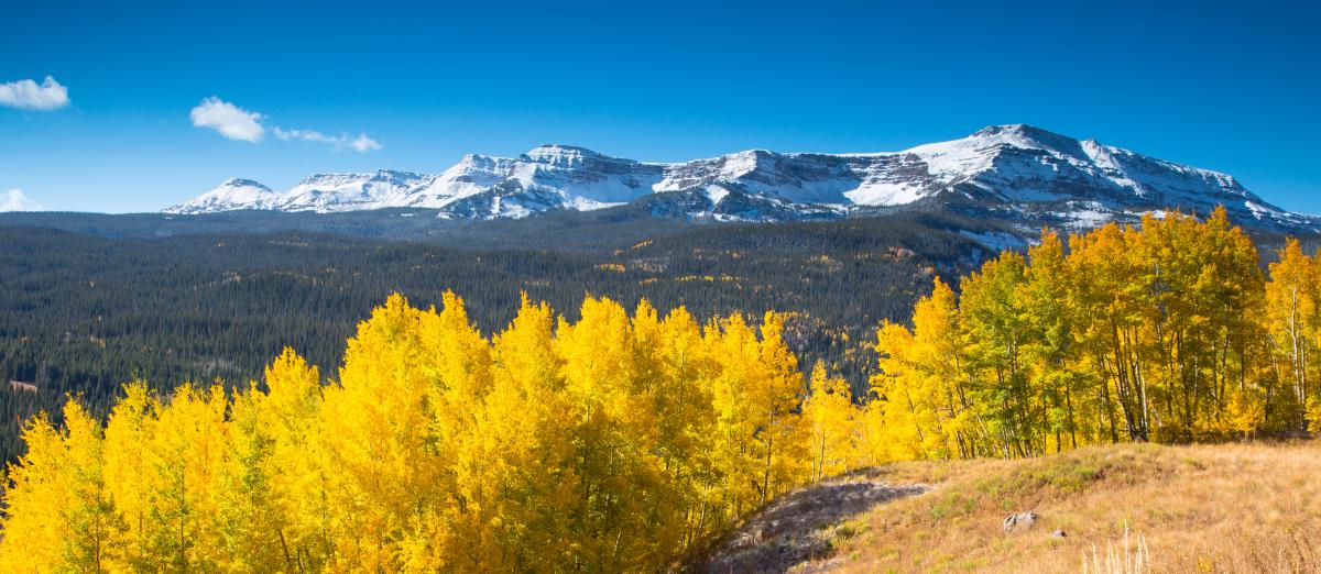 snow capped Flat Tops Wilderness with golden aspen trees