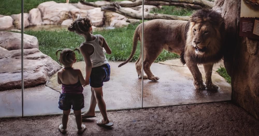 Fort Wayne Children's Zoo - Girls Looking at the Lion