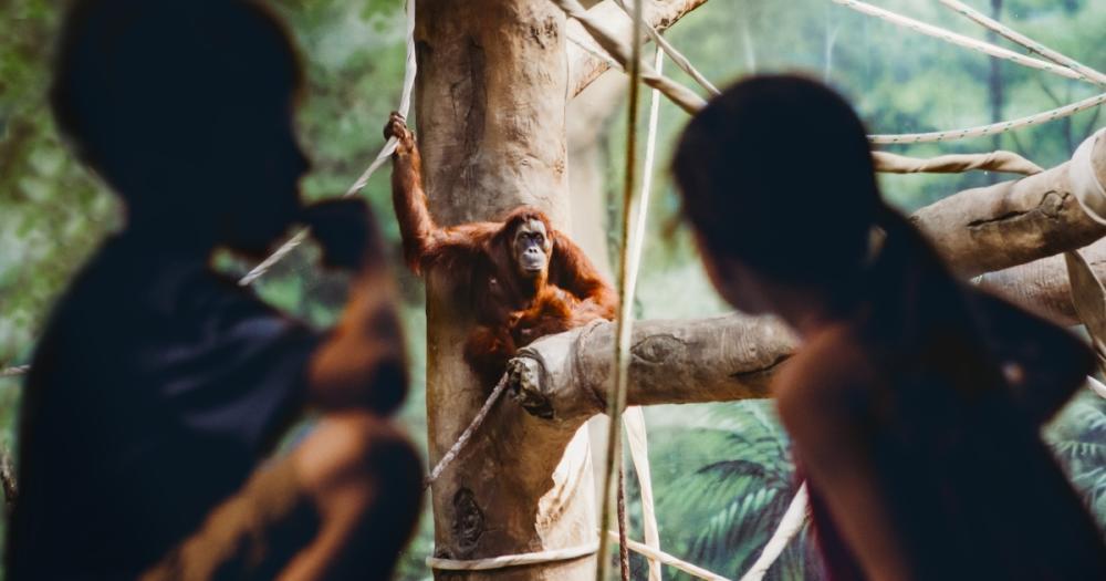 Fort Wayne Children's Zoo - Children at the Orangutan Exhibit - Fort Wayne, Indiana