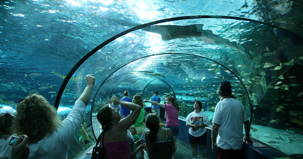 The Tunnel at Ripley's Aquarium