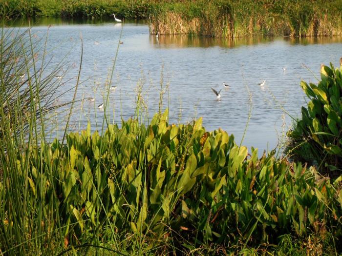 Cattail Marsh Beaumont, TX