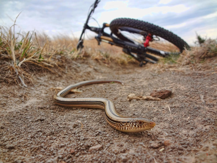 Mountain Biking Nature Sighting - snake