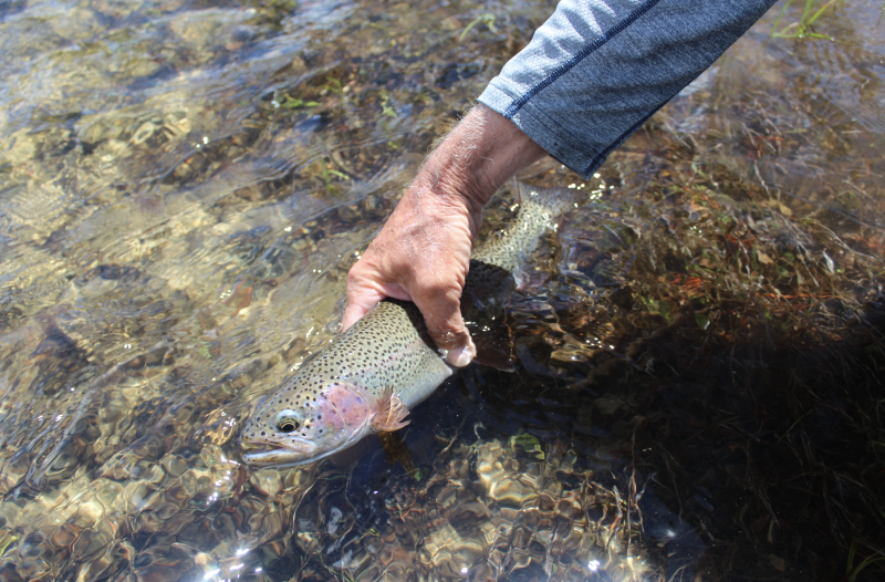 The Cast - Summer Fly-Fishing Primer 2