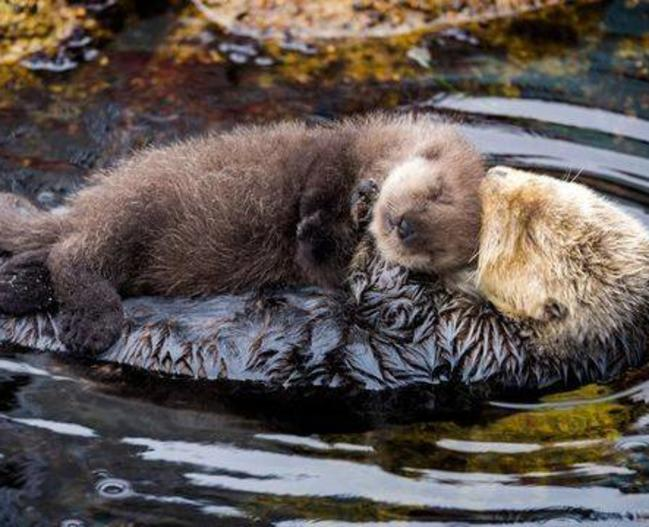 30443_otter mom and pup.jpg