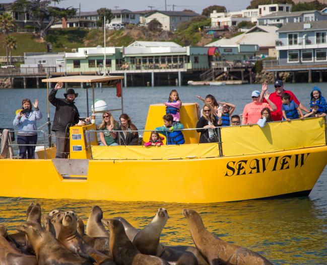 Sub Sea Tours w seals