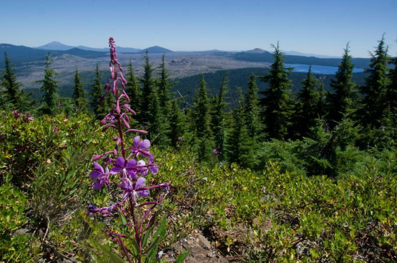 Wildflowers in the Waldo Lake Wilderness by Katie McGuigan