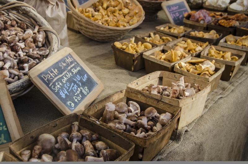 Mushrooms at the Lane County Farmers Market by Katie McGuigan