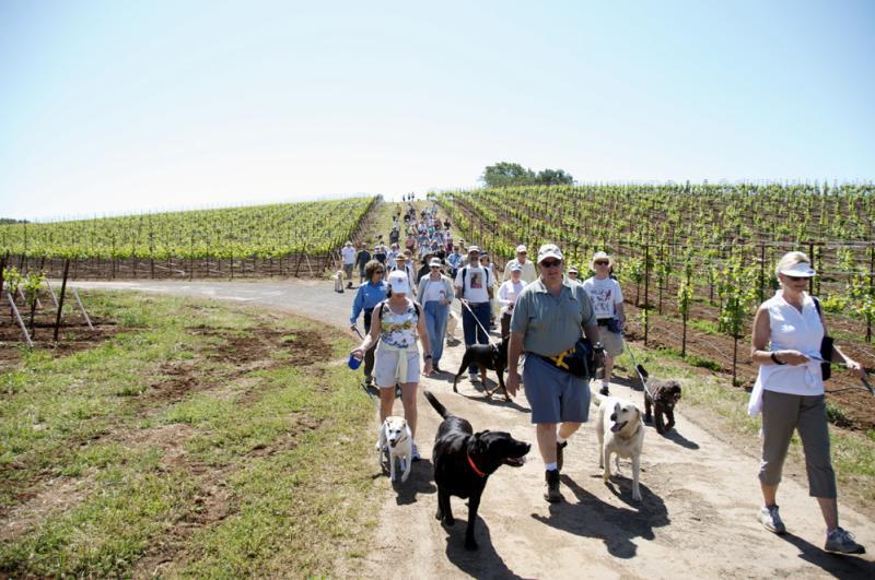 Kunde Winery Dog Hike