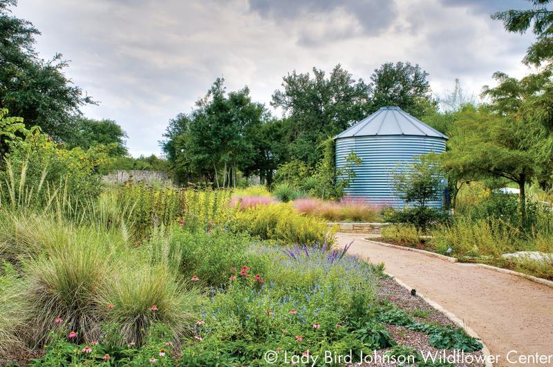 natural Texas garden at the Lady Bird Johnson Wildflower Center