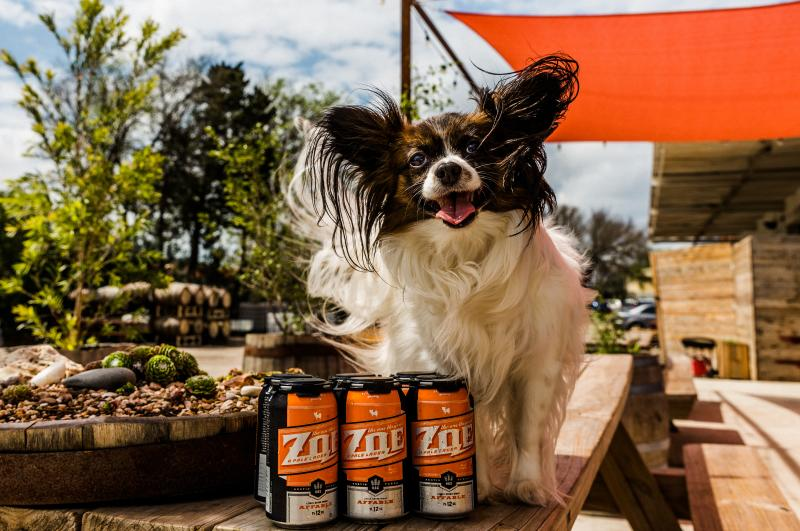 dog on table with six pack of the one they call zoe pale ale from hops and grain brewing in austin texas