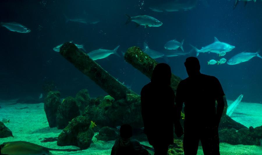 Aquarium Couple