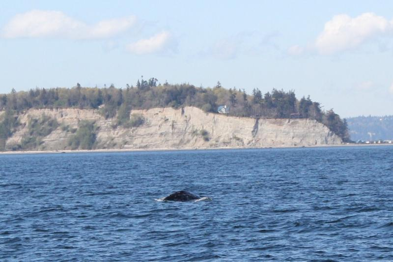 Island Adventure Whale Watching Tour compan