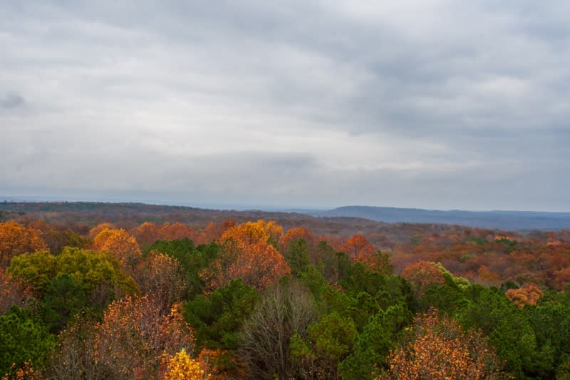 View of fall foliage from Hickory Ridge Fire Tower