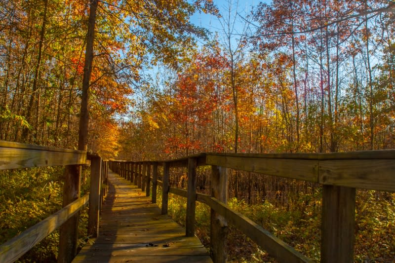The raised walkway at Beanblossom Bottoms Nature Preserve in Bloomington, IN
