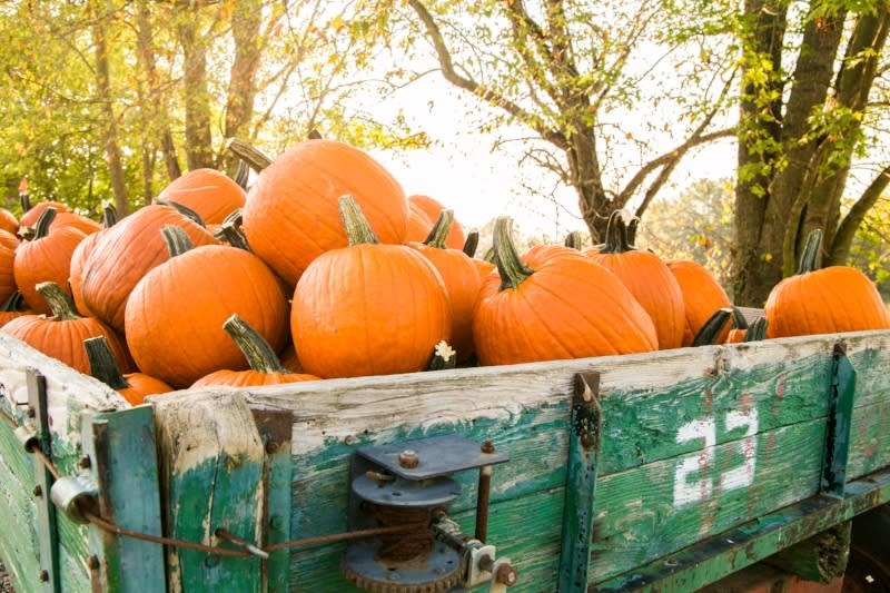 Pumpkins piled in a cart at Fowler Pumpkin Patch in Bloomington, IN