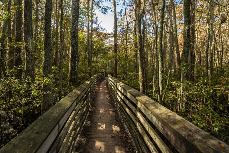 A trail winds through Virginia Beach's First Landing State Park in the Fall