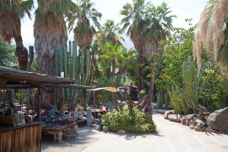Plant Lover S Guide To Greater Palm Springs