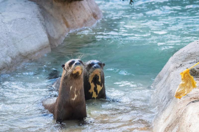 Pantanal en el Houston Zoo