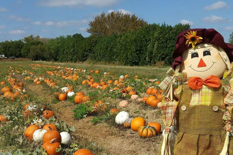Photo of Storm Farms pumpkin patch with fall scarecrow