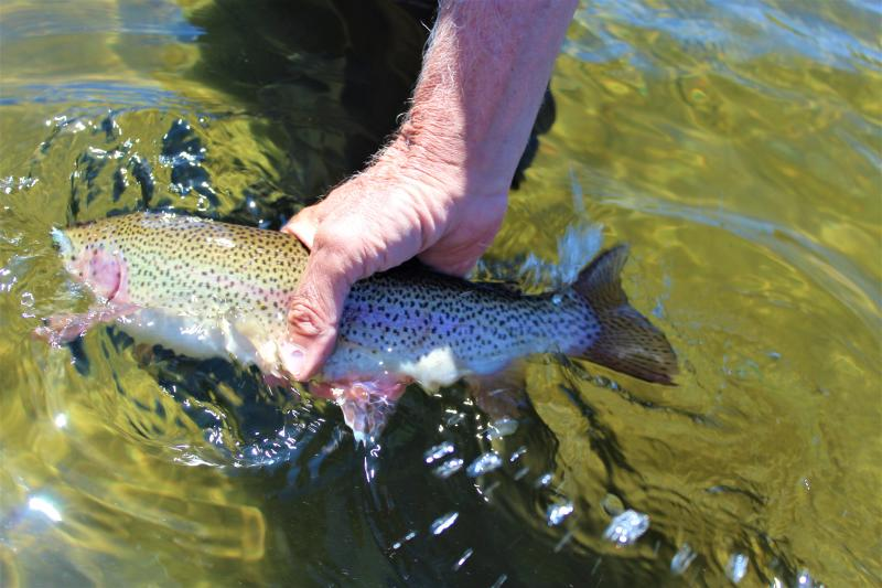 The Cast - Summer Fly-Fishing Primer 1