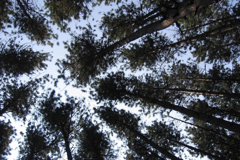 Stargazing at Cumming Nature Center
