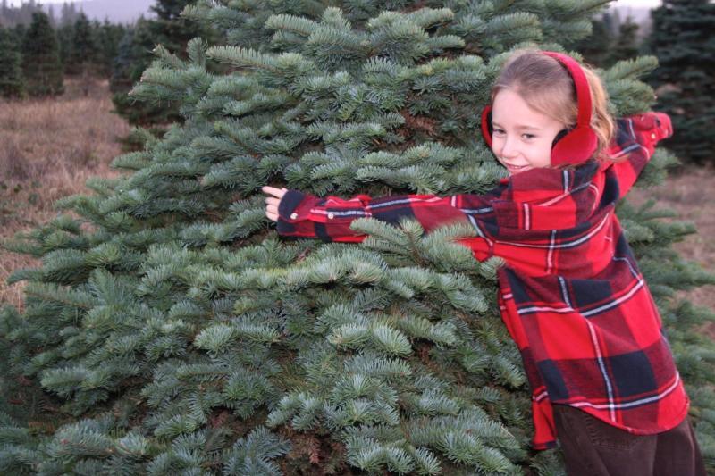 Christmas Tree Farm by Taj Morgan