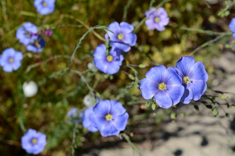 Wildflowers on the Middle Fork Path by Colin Morton