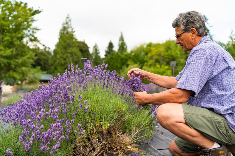 Evergreen Valley Lavender Farm / Thane