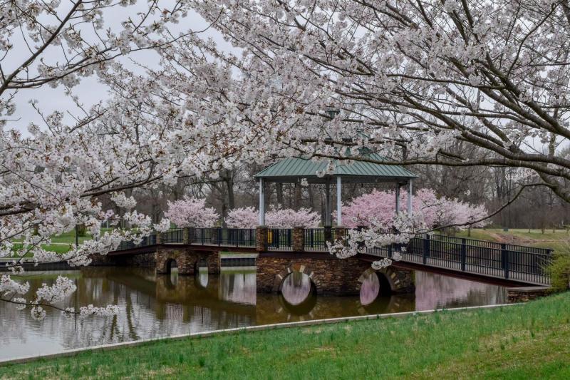 Spring at Noble Park - Steve Gausebeck