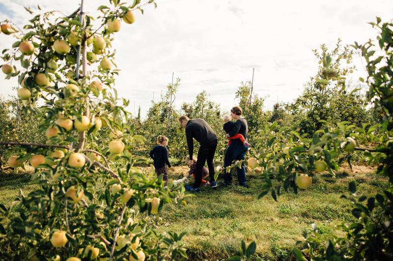 Tanners Orchard