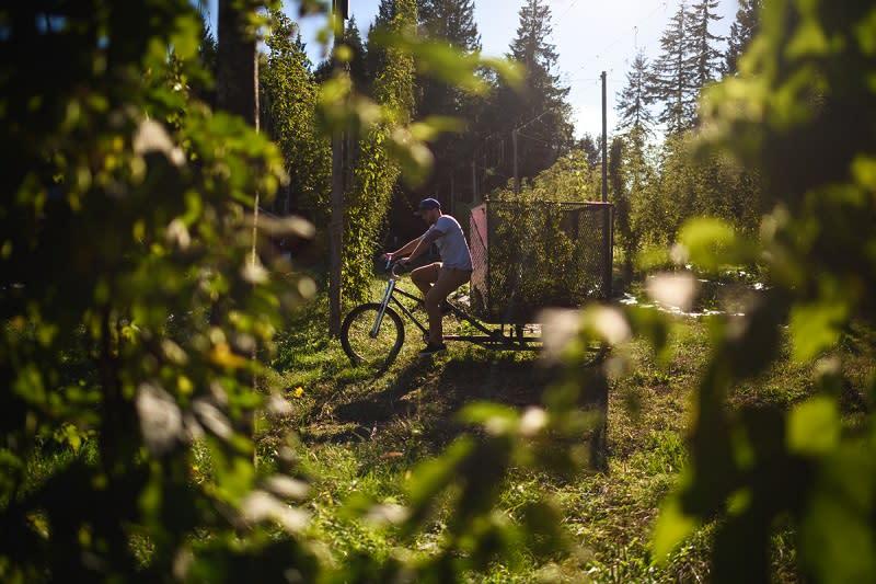 cycling sunshine coast