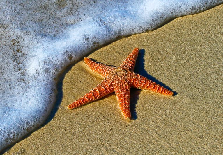 Daytona Beach Resort - STARFISH ON SAND