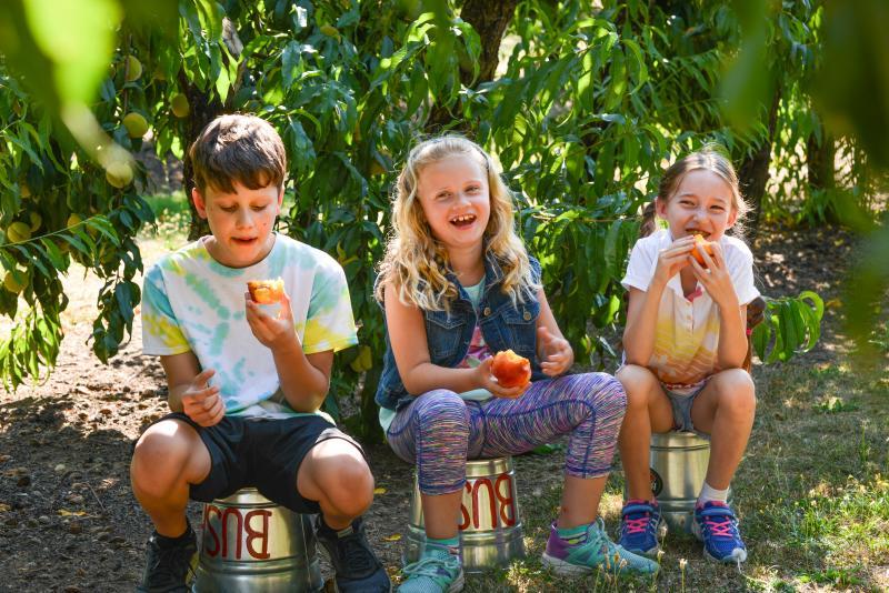 Peach picking at Bush's Fern View Farm by Melanie Griffin