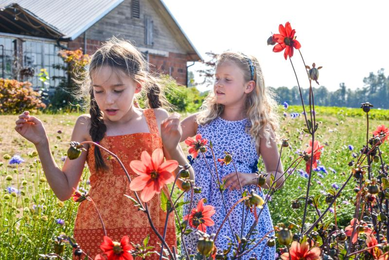 U-Pick Flowers at Groundwork Organics by Melanie Griffin