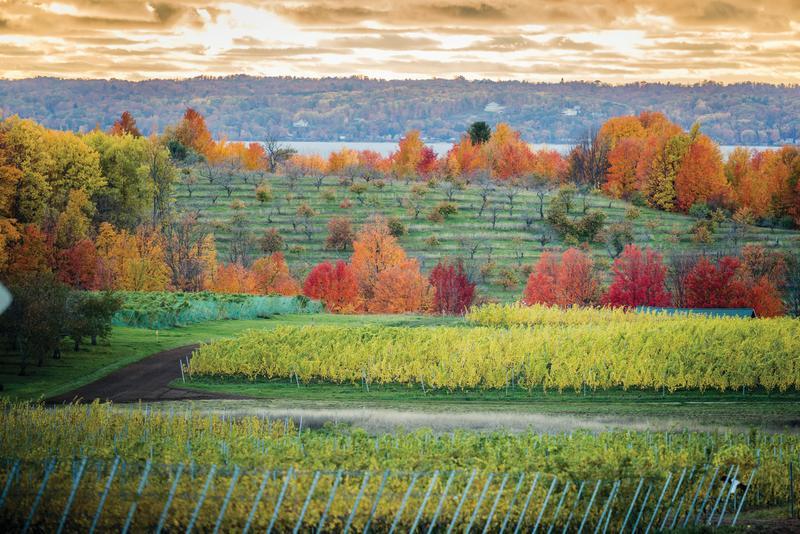 Fall Winery Vineyard View