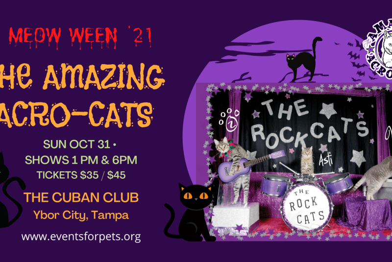 THE AMAZING ACRO-CATS/MEOWWEEN TAMPA