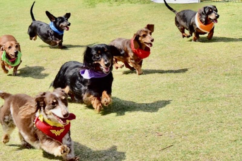 Florida Wiener Dog Derby FWDDXI