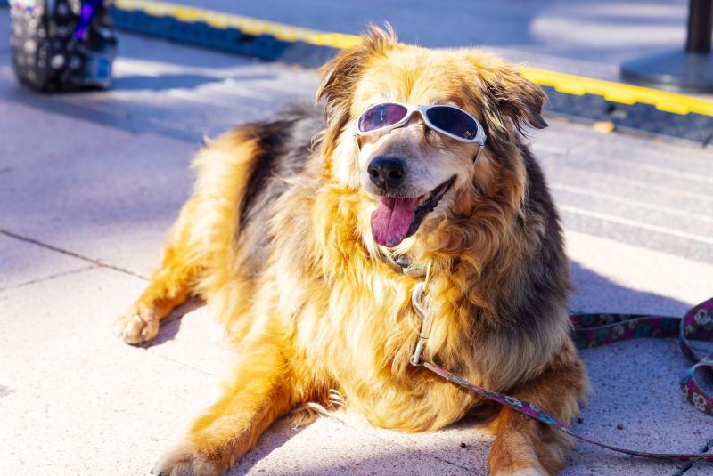 Fetch Social : Bark N Brunch