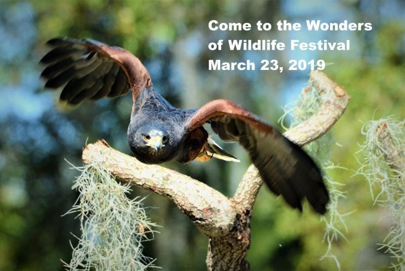 Wonders of Wildlife Festival