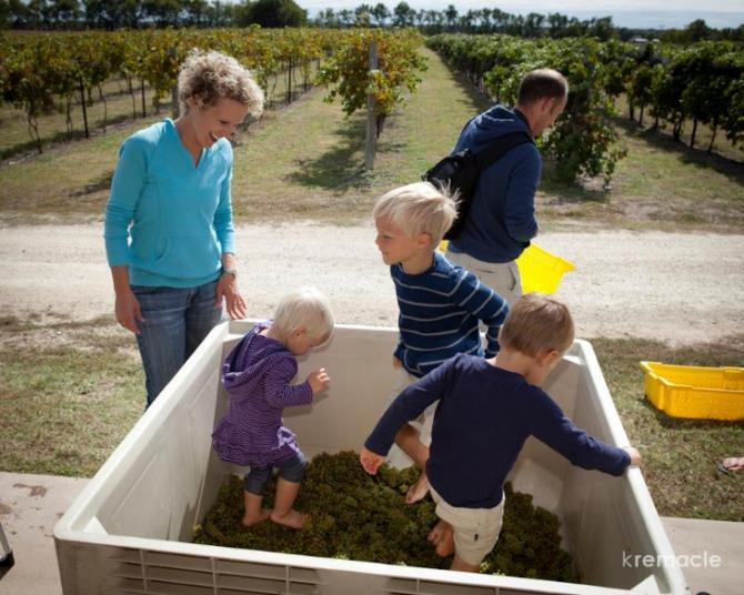 Family and three kids stomp grapes at Grace Hill Winery's annual Grape Stomp