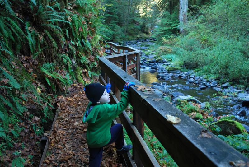 Hiking Sweet Creek Trail by Emily Forsha