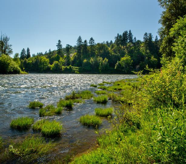 River Forks