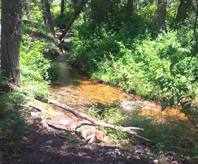 Wardsworth Creek Trail in Hobble Creek Canyon