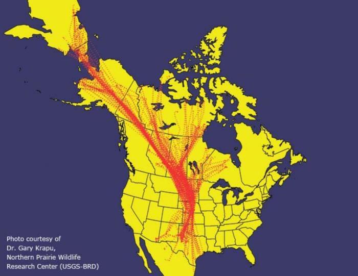 North American map of Sandhill crane migratory flight paths