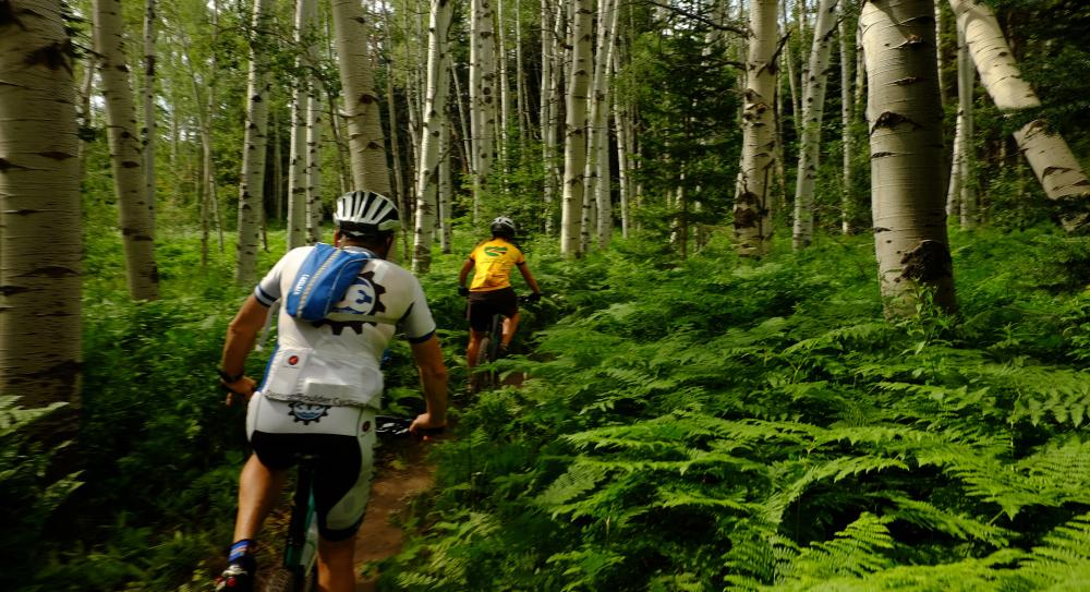 Flash of Gold trail recently open for mountain bikers on Buffalo Pass
