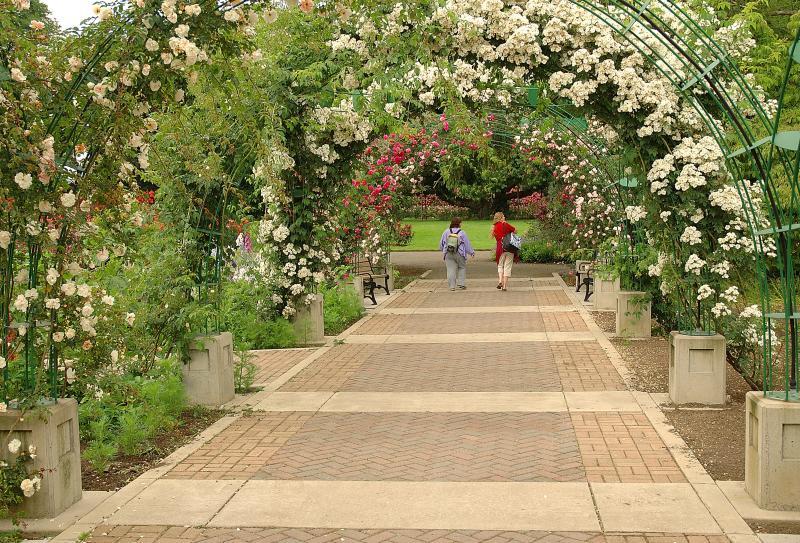 Owen Rose Garden by Timm O'Cobhthaigh