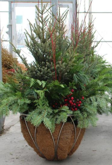 Christmas Tree Shopping at Shelmerdine Winnipeg