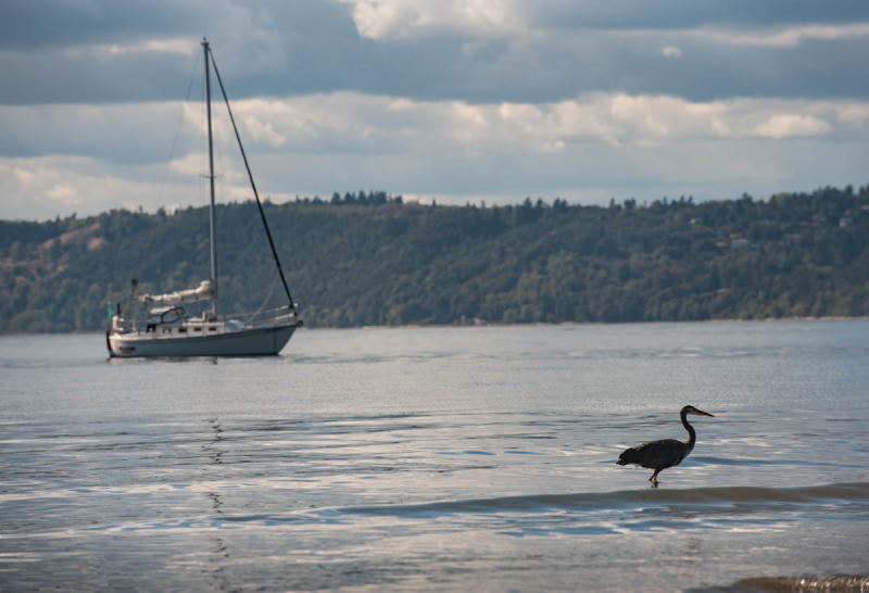Sailboat and Bird at Saltwater State Park in Des Moines